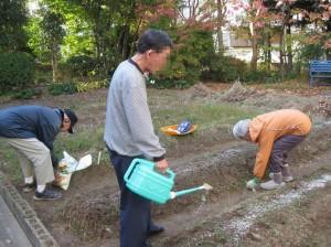 植え付けのしめは水やりと肥料です