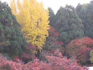 色鮮やかな京都の紅葉