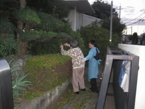 お玄関の庭木の剪定作業
