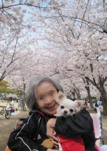 満開の桜の下でわんちゃんと