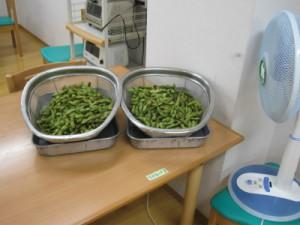 たくさんの黒豆の枝豆です