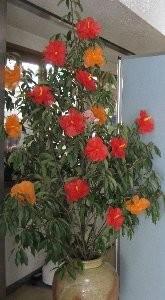 これはどんぐりの木に手作りハイビスカスを飾ってみました