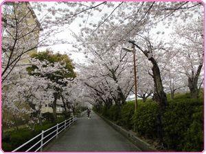 桜ウィーク1
