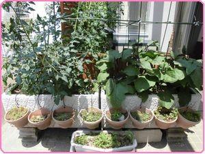 収穫祭野菜4