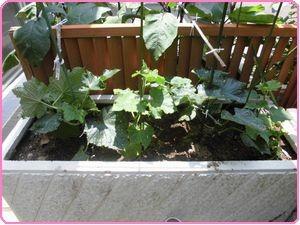 収穫祭野菜2